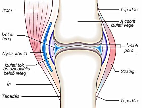 általános artróziskezelés az artrózis kezelésének dexametazonnal történő kezelése