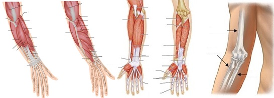 térdfájdalom a belső oldalán fájdalom az ujjak ízületeiben hajlítva