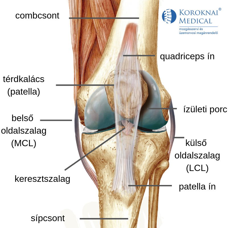 hatékony térdízület ízületi gyulladások térd artritisz gyógyszerek