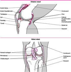 csontok és ízületek sérüléseinek komplikációi a talp ízületei fájnak
