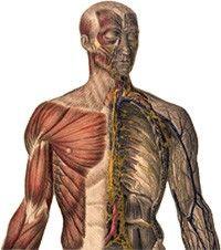 emberi csípő sérülés ízületek új kezelése