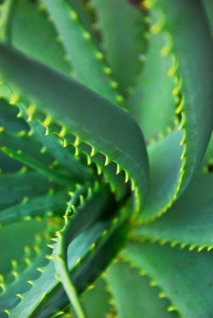agave ízületi kezelés ízületi betegség epicondylitis