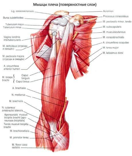a kéz distalis interfalangealis ízületei artrózisa fáj a vállízület önmagában