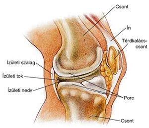 a csípőízület artrózisának osztályozása csípőartrózis okai