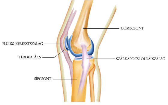 hogyan lehet kezelni a lábak és ízületek fájdalmait