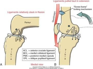 ligamento ízületi és csontbalzsam