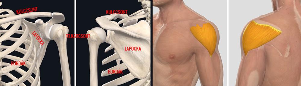 ízületi károk okai artróziskezelő gépek áttekintése