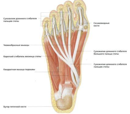 a lábak ízületeinek gyulladása hipotermia következtében az ujjak rheumatoid arthritis kezelése