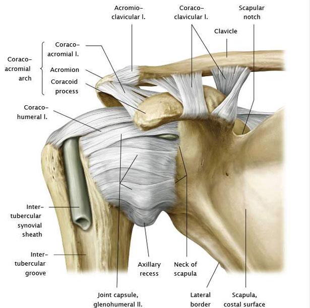 ízületi szalag vállfájdalom artritisz