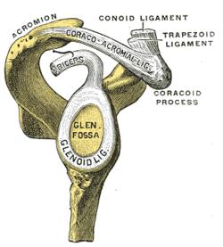 Mi az Acromion-Clavicular Arthrosis?