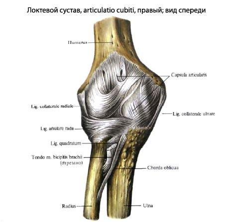 Rheumatoid arthritis diagnózisa és kezelése