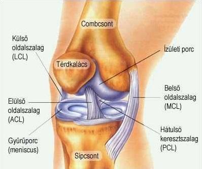 térdízületi kezelés szubchondrális szklerózisa ízületi fájdalmak ízületi gyulladás
