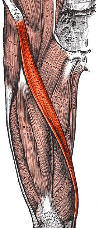 emberi csípő sérülés amely segít a vállízület fájdalmain