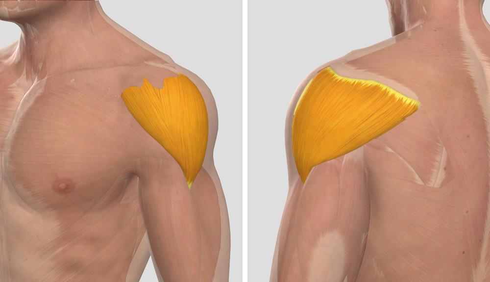 egy sor gyakorlat a könyökízület fájdalmához a csípőízület gonartrosisának 1 fokos kezelése