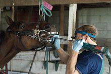 közös állatgyógyászati készítmények boka fájdalom futás közben