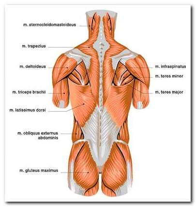 A mellkasi gerinc neuralgia: tünetek és kezelés