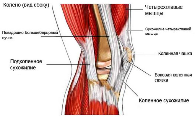 Mozaik porcplasztika a medialis femur condylus osteochondrosis műtéti megoldására
