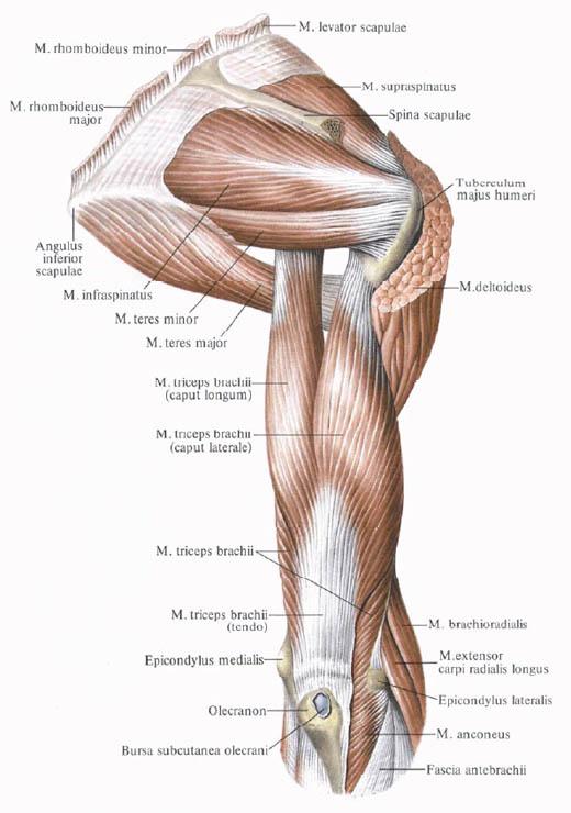 A felső végtag leggyakoribb sérülései - Súlypont Ízületklinika