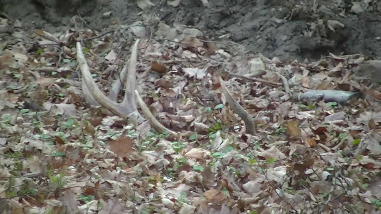 Agancs-vadászok