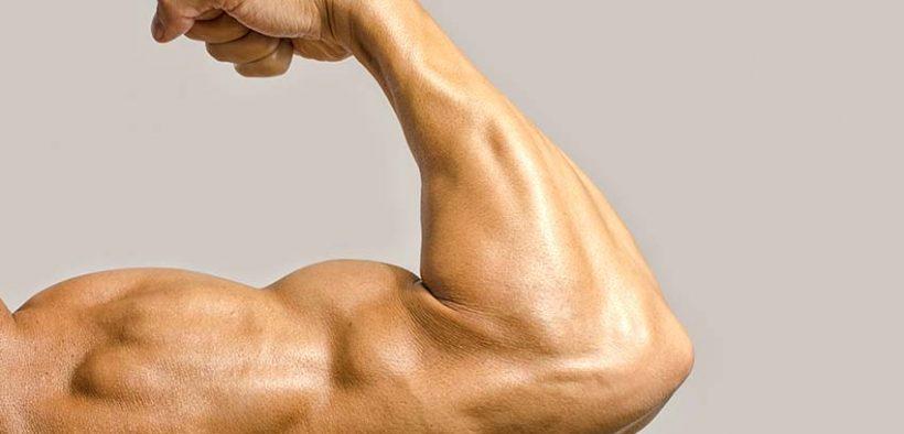Bicepsz-ín szakadások - halasszallo.hu PORTÁL