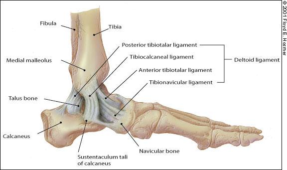 éjszakai fájdalom a csípőben artrózis kezelésére