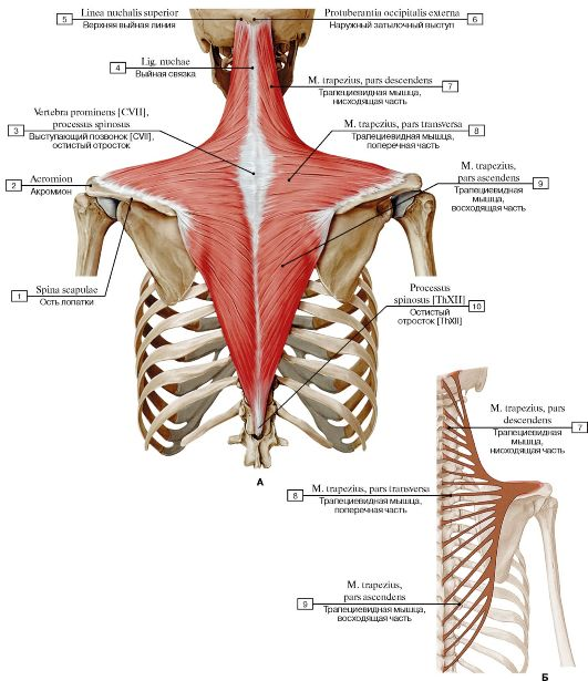 A jobb sípcsont oszteomyelitisz. Osteomyelitis: a betegség okai, tünetei és kezelése