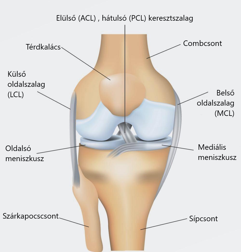 térdízület fáj, hogyan lehet enyhíteni a fájdalmat
