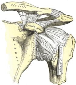Osteoarthritis acromioclavicularis közös kezelés - Kár