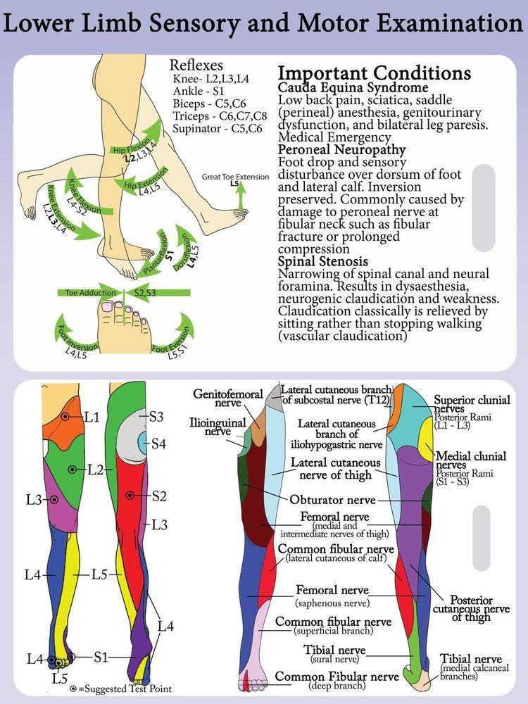 csípőzsák ízületi fájdalom az artrózisos fermatron kezelése