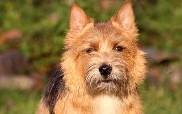 Közös nyaralás a kutyával, avagy hasznos tanácsok utazás előtt – 1. rész