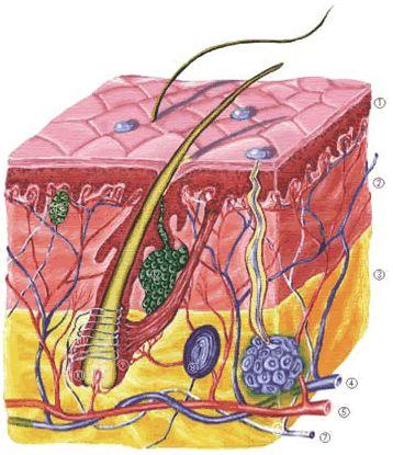 nyomásterápia térd ízületi gyulladás esetén szenilis ízületi fájdalom