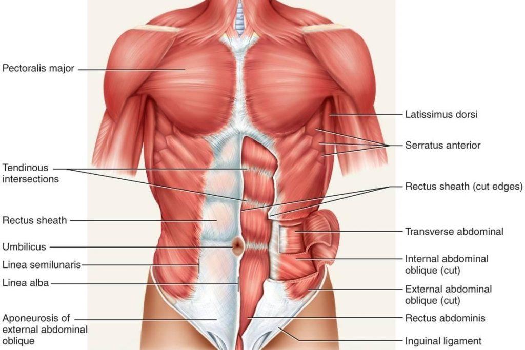 csípőízületi fájdalom, mint a kezelés a térd artrózisának elektroforézis kezelése