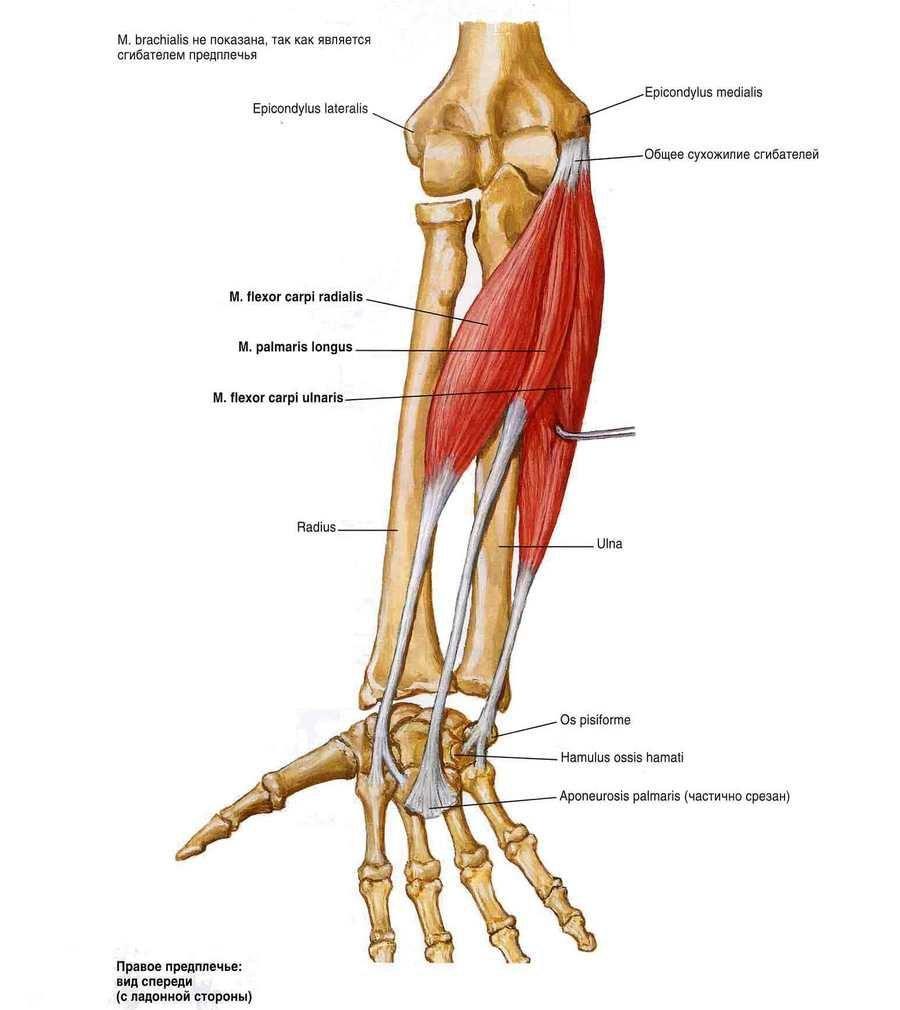 Lehet futtatni a csípőízület artrózisával?. Térd sérülés okai