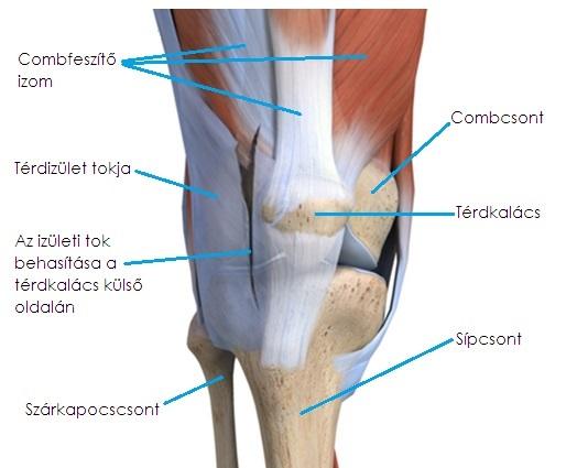 dalok az artrózis kezelésére térdízületi kezelés diprospannal