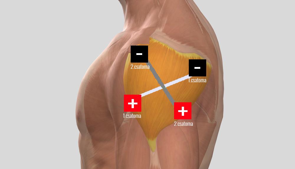 ízületi fájdalmak kezelésére, bojtorján történő kezelés