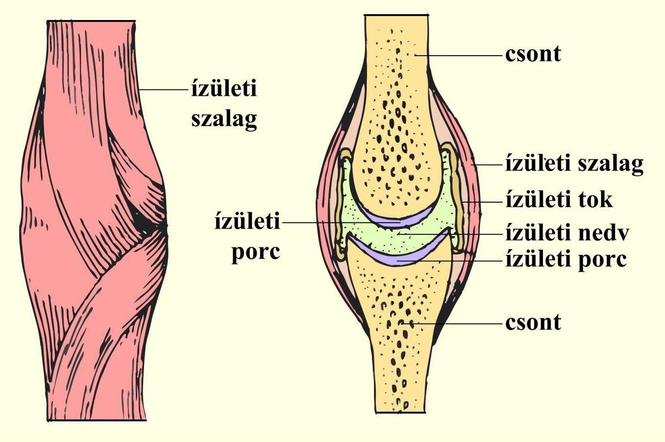 3 ok, hogy miért egyél céklát ízületi fájdalomra