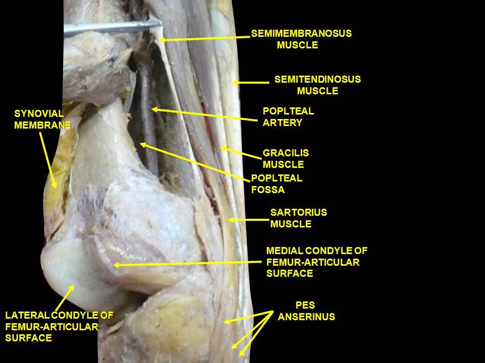 vállízület betegség epicondylitis