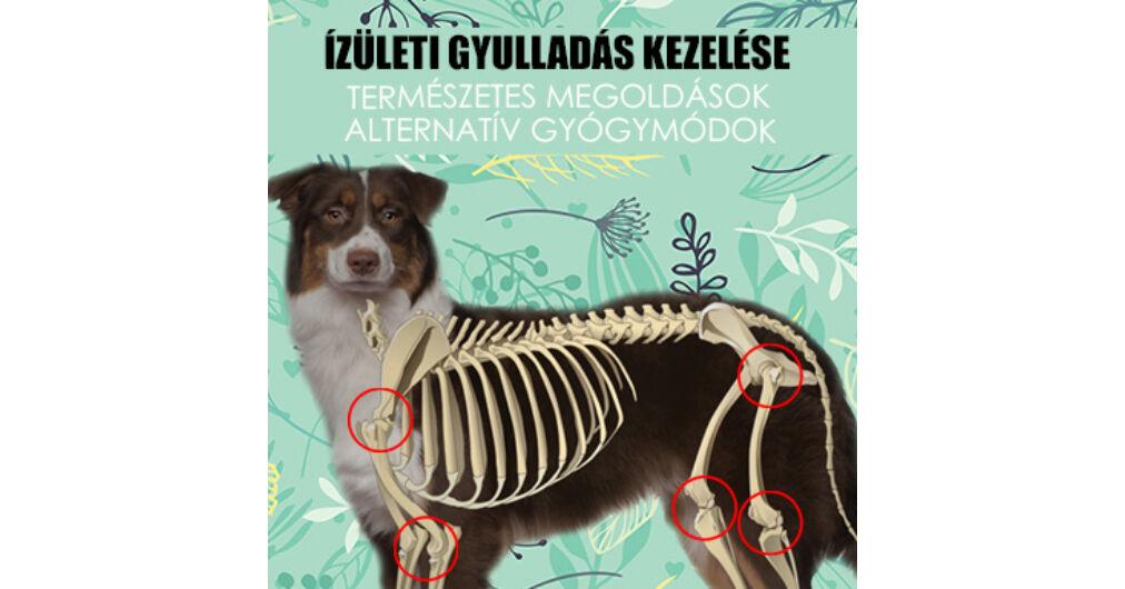 izületi gyulladáscsökkentő kutyáknak