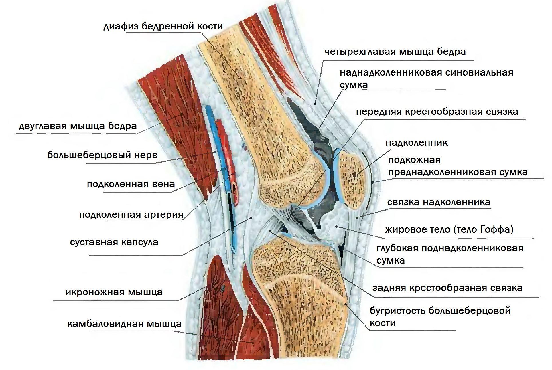 ízületi fájdalomcsillapító szerek nem deformált boka artritisz